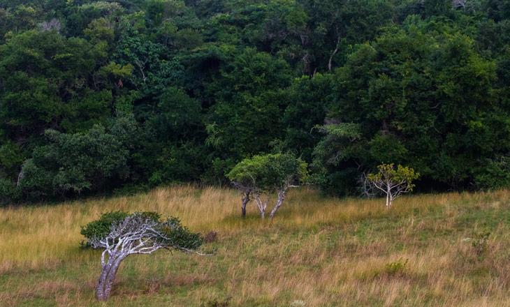 dia_mundial_floresta