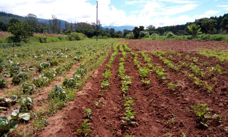 Projecto-de-agricultura-irrigada,-Rotanda
