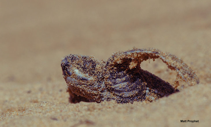 Tartarugas-Coreaceas_emergence