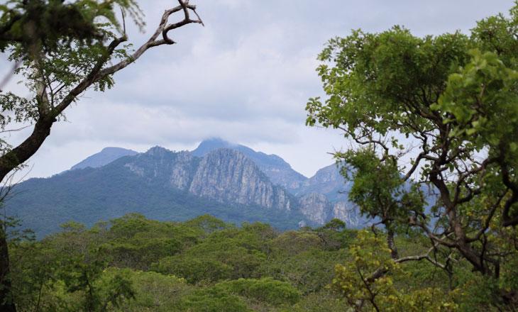 Chimanimani-Mountain-Landscape-by-Millie-Kerr-for-FFI--1