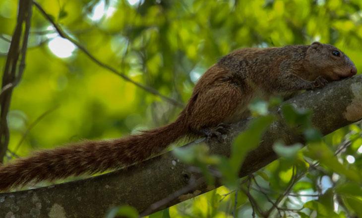 Sun-Squirrel-Chimanimani-Millie-Kerr-for-FFI-1