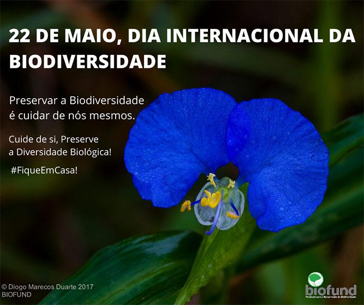 Cartaz-do-Dia-da-Biodiversidade_V