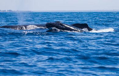 Dia Mundial dos Oceanos: 8 de Junho