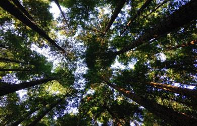 Dia Mundial do Meio Ambiente: Estagiários do PLCM Promovem acções para a Preservação do Ambiente