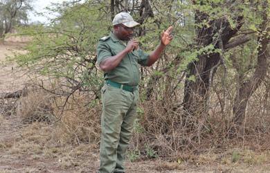 Desafios por de trás da fiscalização da biodiversidade: uma história que inspira