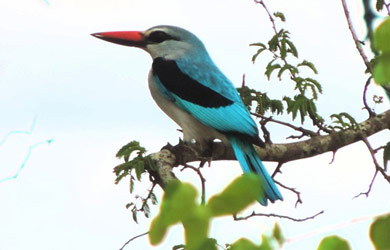 Nossa Biodiversidade: Amostragem de Espécies Exclusivas no Parque Nacional de Banhine