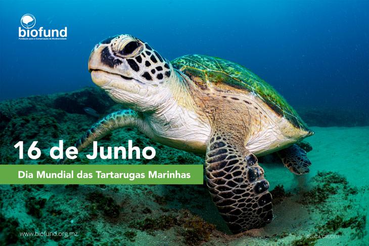 dia-mundial-tartaruga