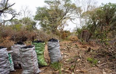 BIOFUND e parceiros realizam estudos sobre a cadeia de valor do carvão vegetal na Reserva Florestal de Licuáti e Área Envolvente